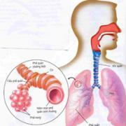 Phòng bệnh cúm và viêm phổi do phế cầu